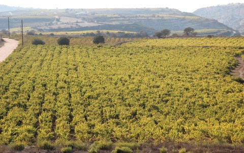 Cypriotische wijnen