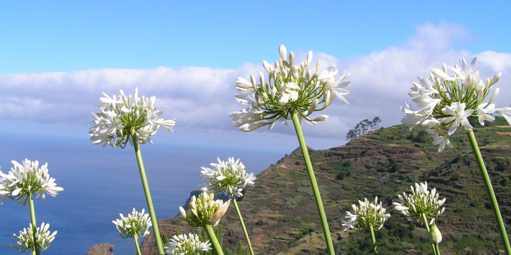 Wandelen op bloemeneiland Madeira, zó mooi!