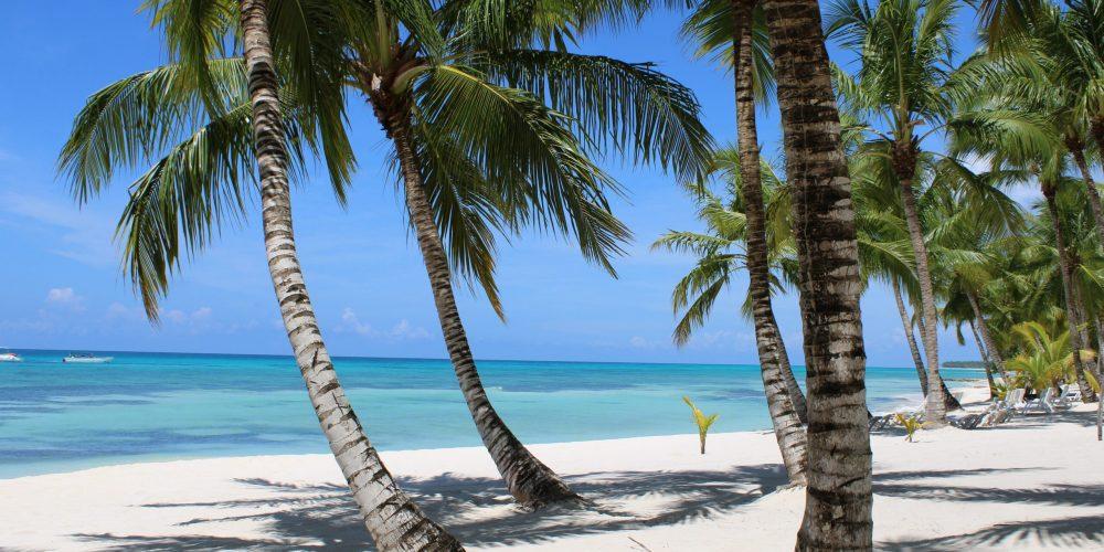 Wuivende palmbomen op de Dominicaanse Republiek